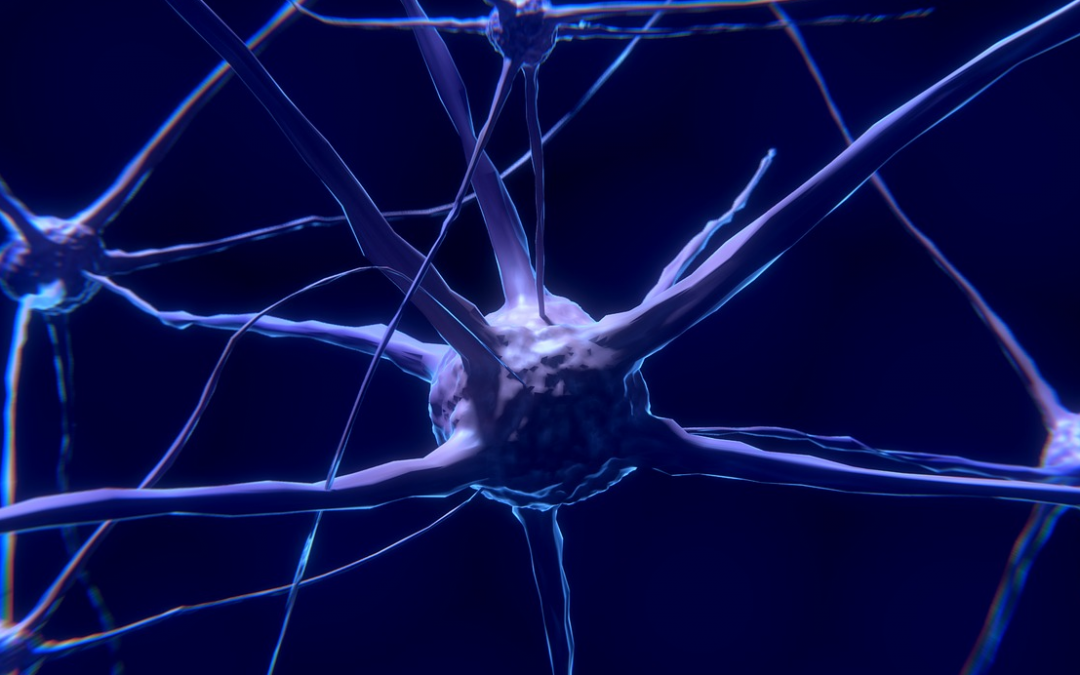 What happens to the brain as we age?